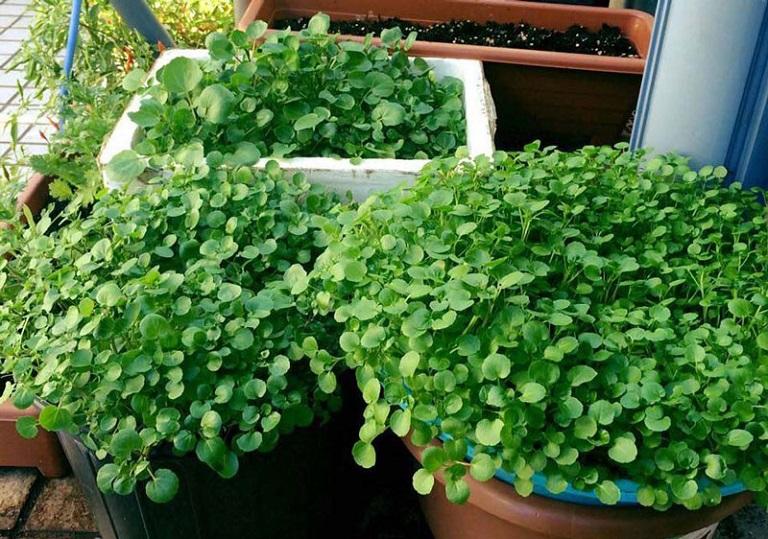 12 loại rau bạn nên trồng trong tháng 11 - Ảnh 6.