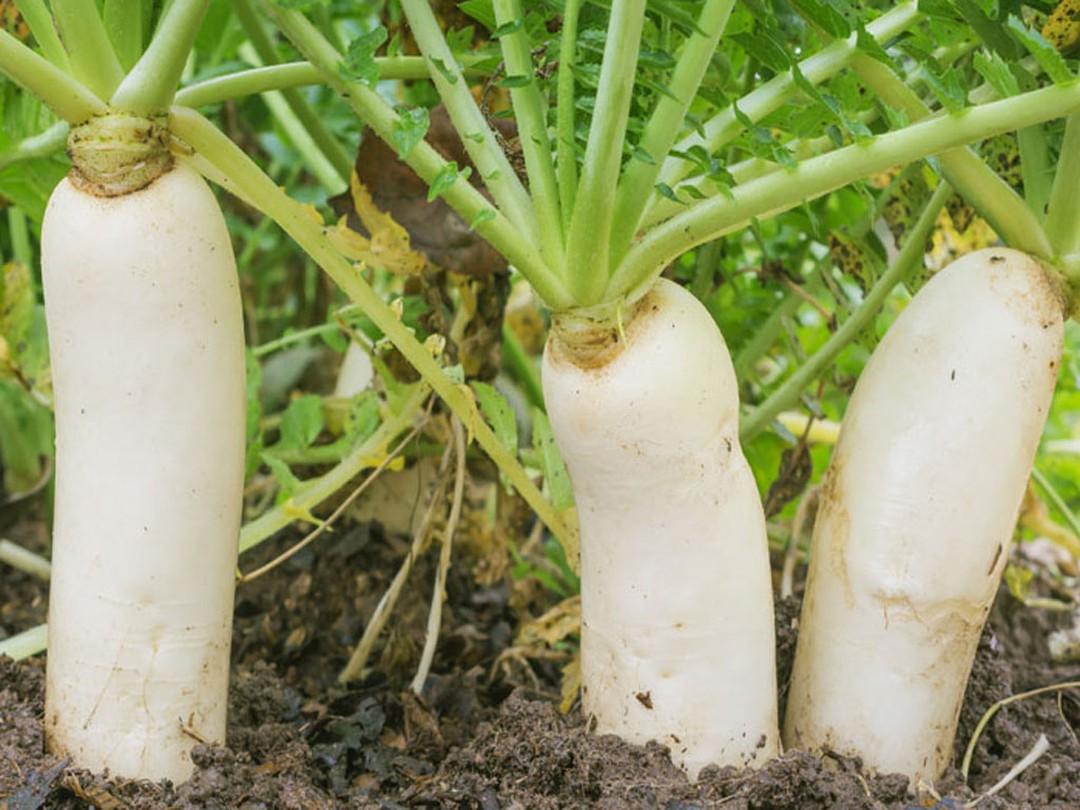 12 loại rau bạn nên trồng trong tháng 11 - Ảnh 10.
