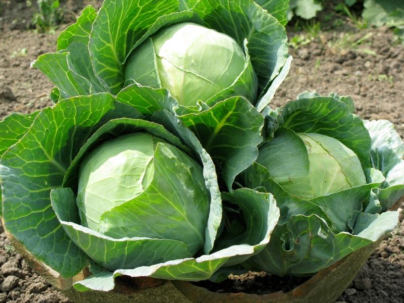 12 loại rau bạn nên trồng trong tháng 11 - Ảnh 9.