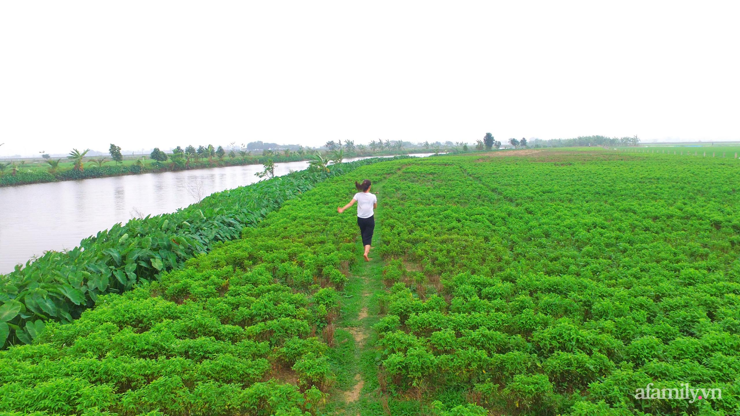 Quyết định bỏ phố về quê sống tối giản cô gái Nam Định chỉ tiêu tới 1/5 lương nhưng sau 3 tháng phát hiện điều bất lợi này - Ảnh 2.