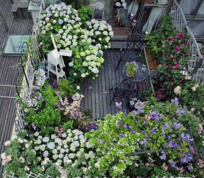 Ngất ngây ngắm nhìn vườn cẩm tú cầu rực rỡ khoe sắc trên sân thượng - Ảnh 6.