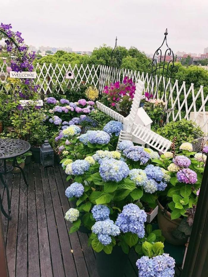 Ngất ngây ngắm nhìn vườn cẩm tú cầu rực rỡ khoe sắc trên sân thượng - Ảnh 15.