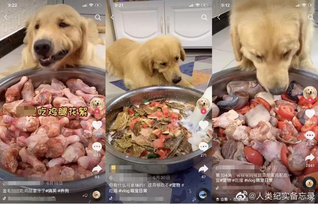 Phẫn nộ với những hành vi ngược đãi động vật vì câu view: Bỏ đói mèo con để trông đáng yêu hơn, ép chó ăn ớt đến mức rơi nước mắt - Ảnh 3.