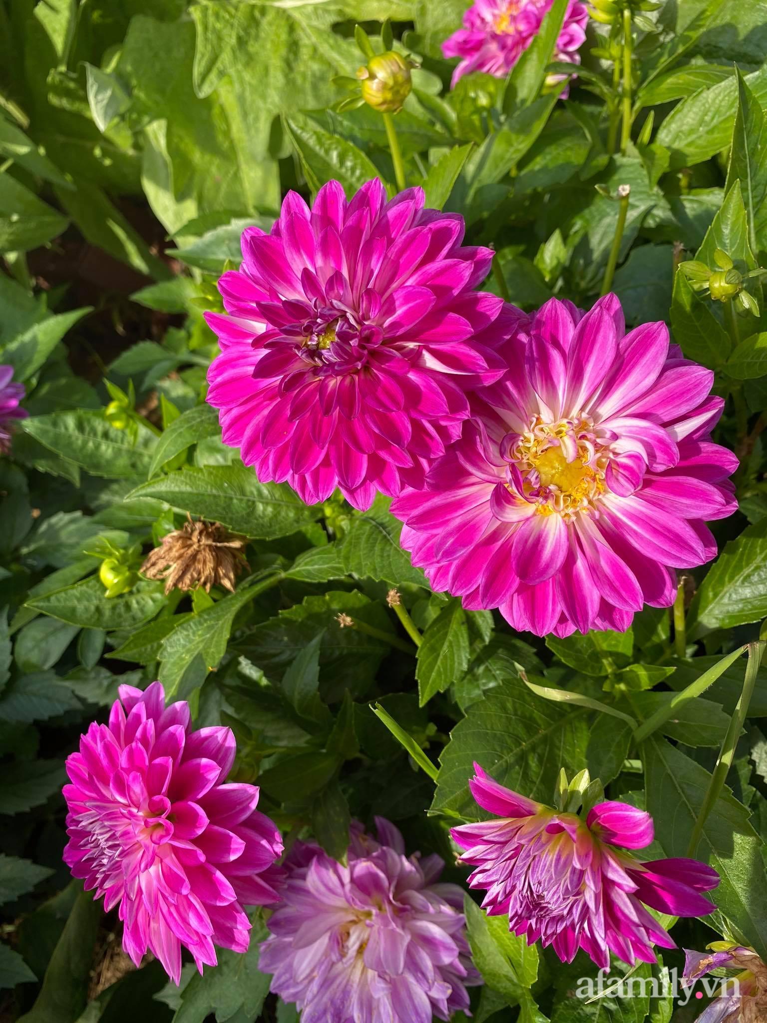Khu vườn ngát hương hoa, tươi xanh màu rau củ của nữ giám đốc Việt ở Nga - Ảnh 14.