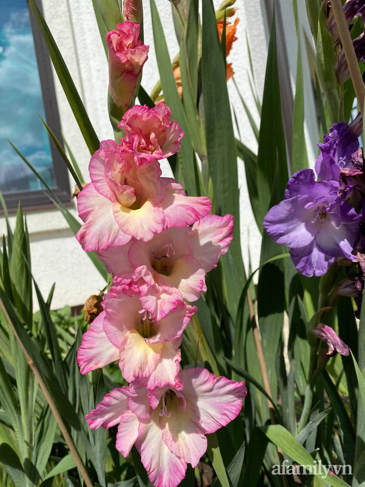 Khu vườn ngát hương hoa, tươi xanh màu rau củ của nữ giám đốc Việt ở Nga - Ảnh 16.