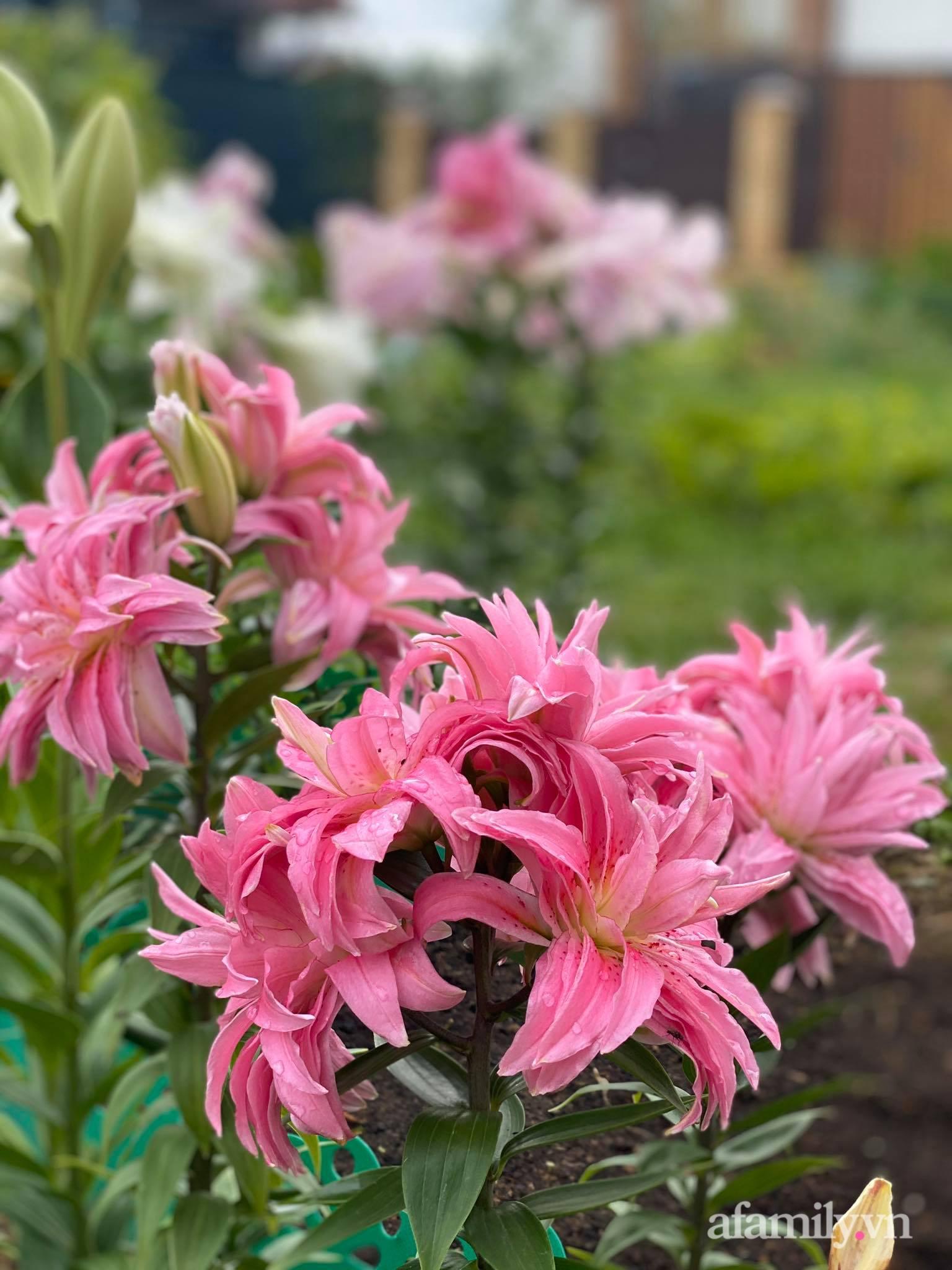 Khu vườn ngát hương hoa, tươi xanh màu rau củ của nữ giám đốc Việt ở Nga - Ảnh 12.