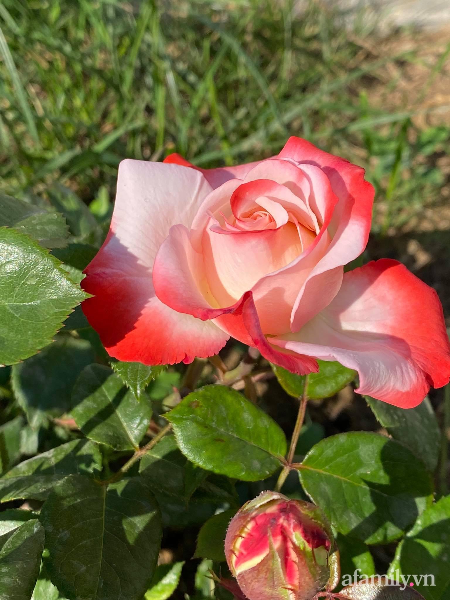 Khu vườn ngát hương hoa, tươi xanh màu rau củ của nữ giám đốc Việt ở Nga - Ảnh 10.