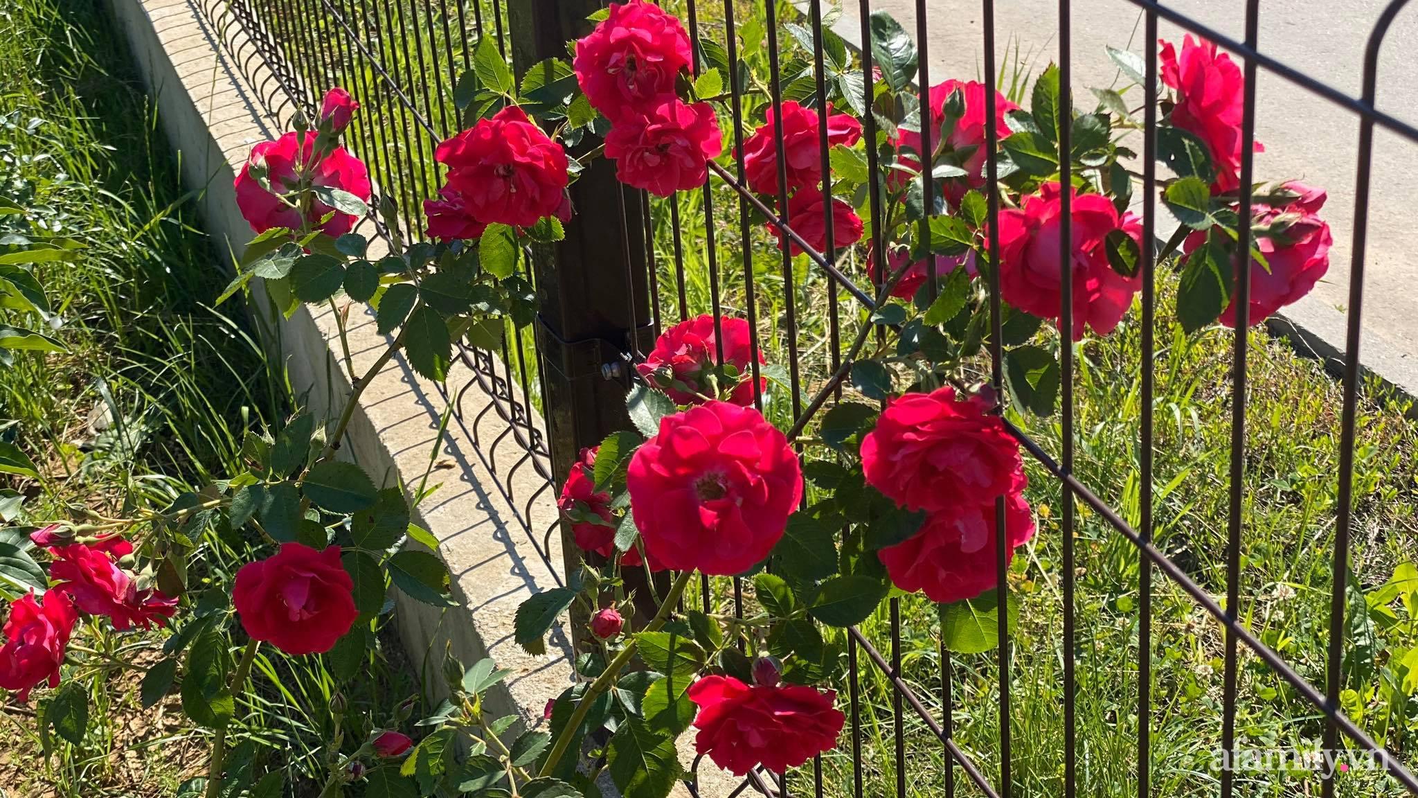 Khu vườn ngát hương hoa, tươi xanh màu rau củ của nữ giám đốc Việt ở Nga - Ảnh 7.