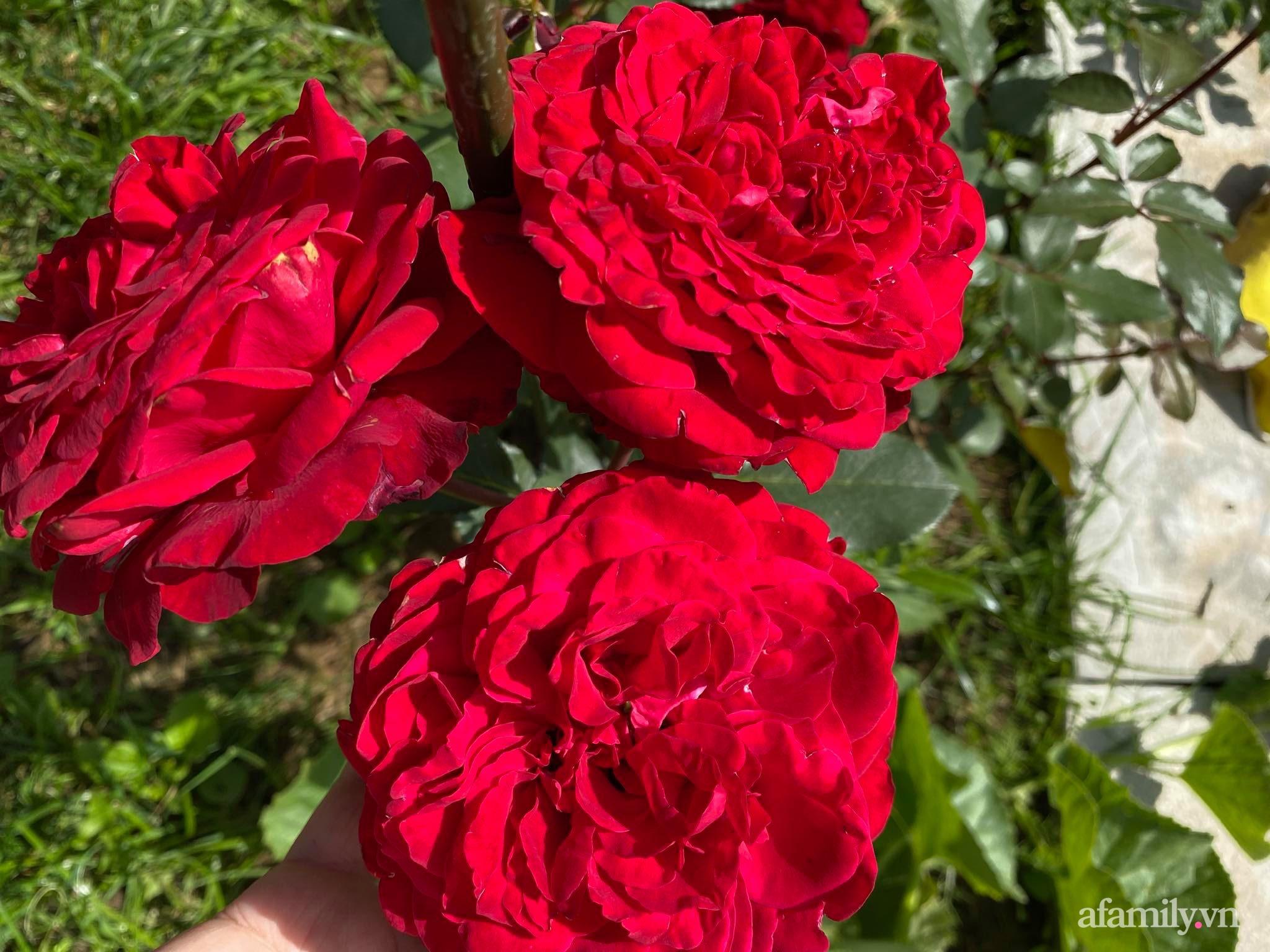 Khu vườn ngát hương hoa, tươi xanh màu rau củ của nữ giám đốc Việt ở Nga - Ảnh 3.