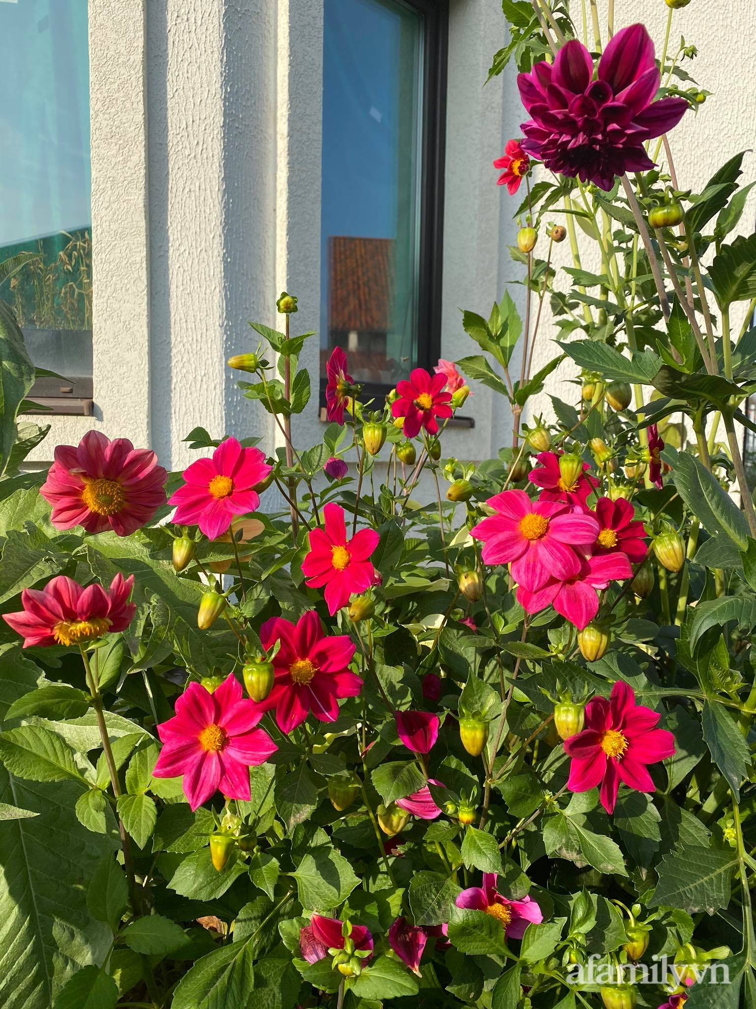 Khu vườn ngát hương hoa, tươi xanh màu rau củ của nữ giám đốc Việt ở Nga - Ảnh 9.