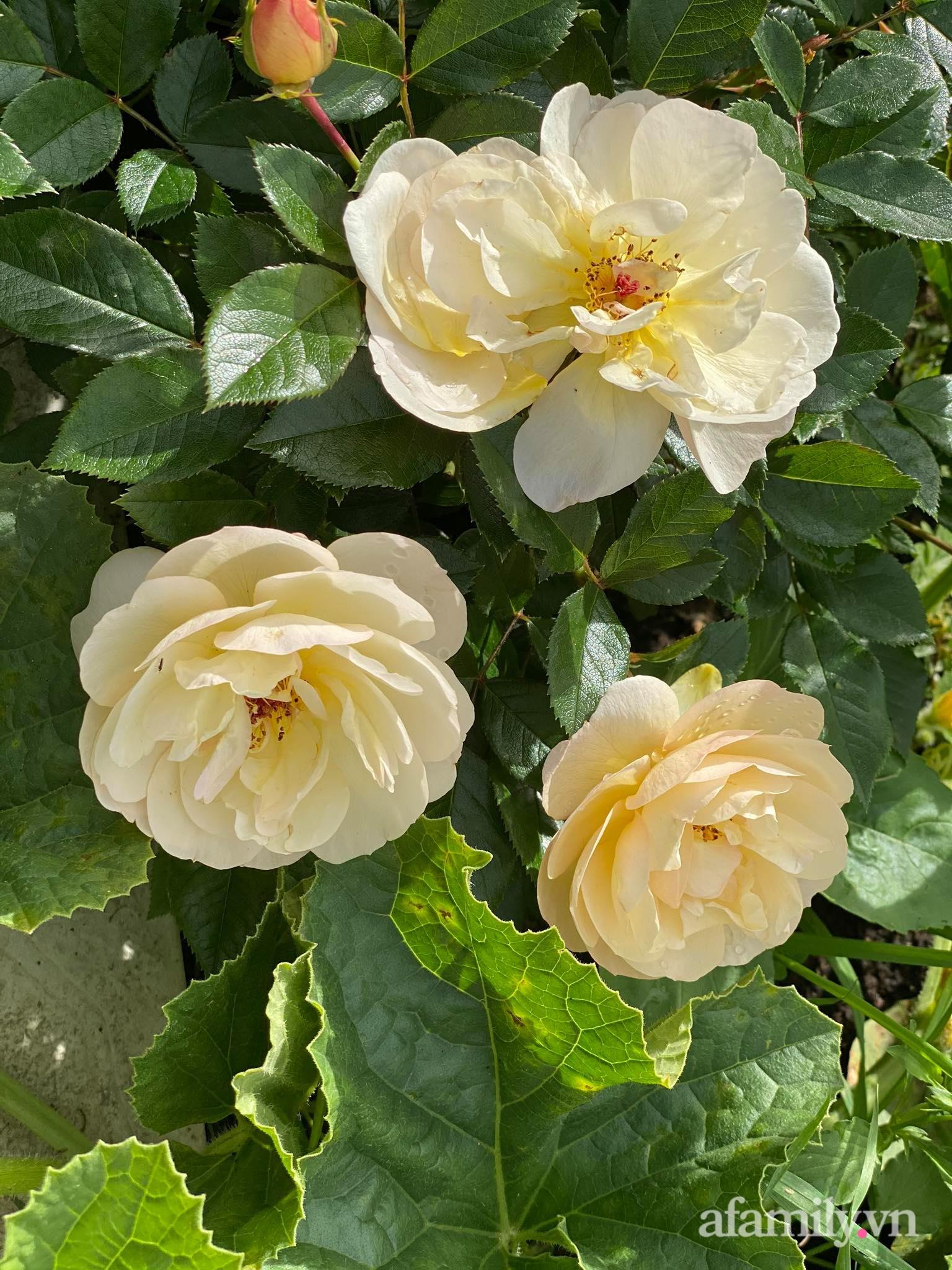 Khu vườn ngát hương hoa, tươi xanh màu rau củ của nữ giám đốc Việt ở Nga - Ảnh 6.