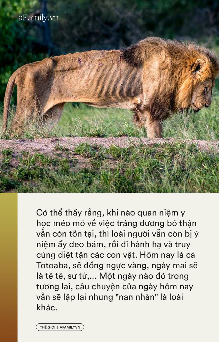 Bổ thận tráng dương - Cái mác mà con người gắn lên các con vật để truy cùng diệt tận từ cá, chim đến sư tử và tiếp theo là loài nào? - Ảnh 10.