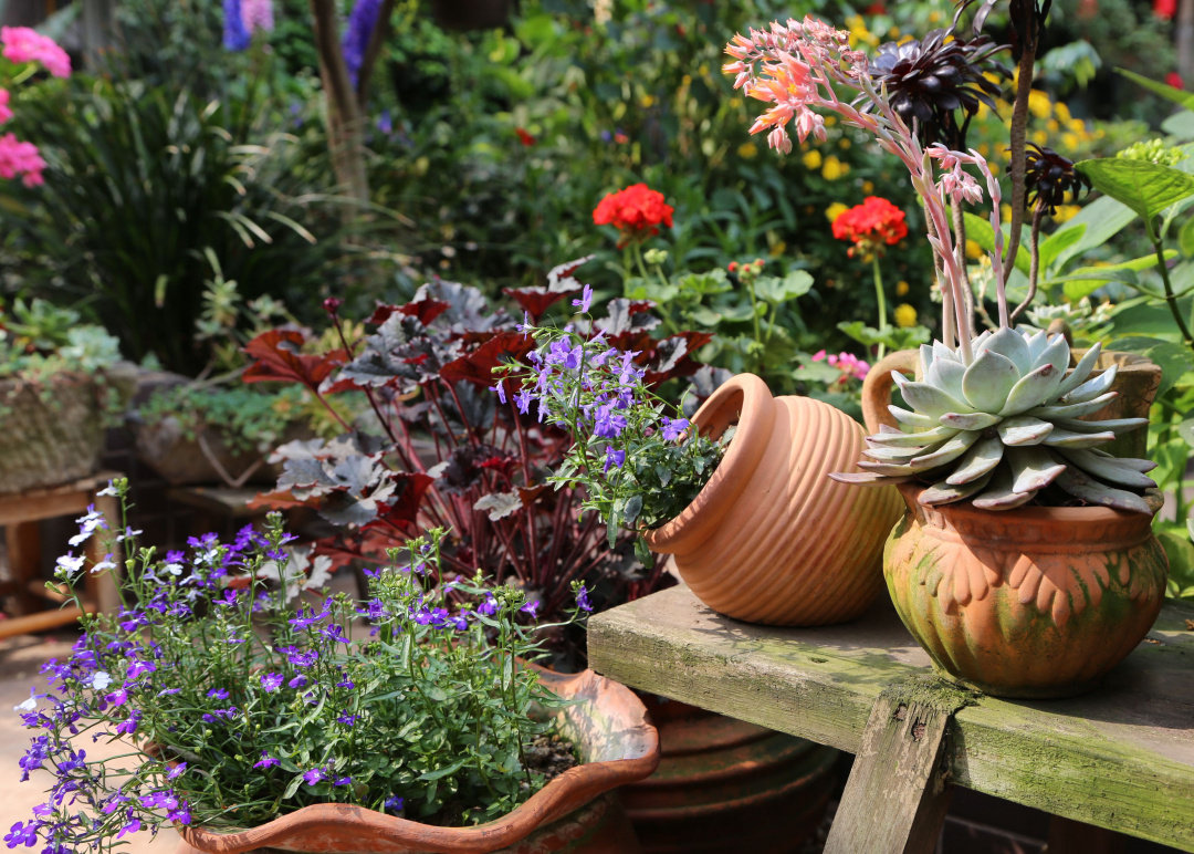 """Khu vườn quanh năm chỉ có """"mùa xuân"""" ở lại của cô giáo dạy Toán xinh đẹp - Ảnh 4."""