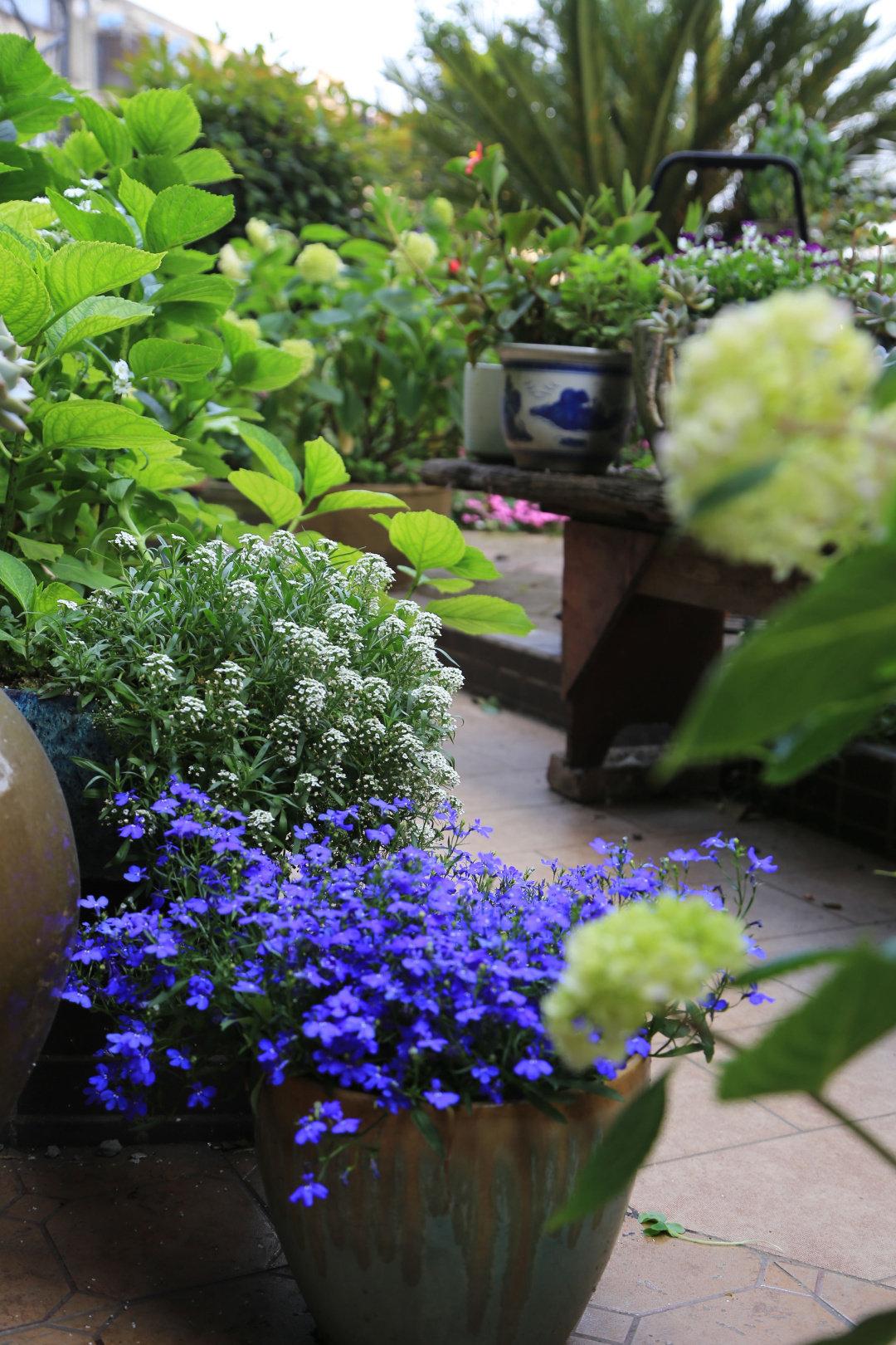 """Khu vườn quanh năm chỉ có """"mùa xuân"""" ở lại của cô giáo dạy Toán xinh đẹp - Ảnh 7."""