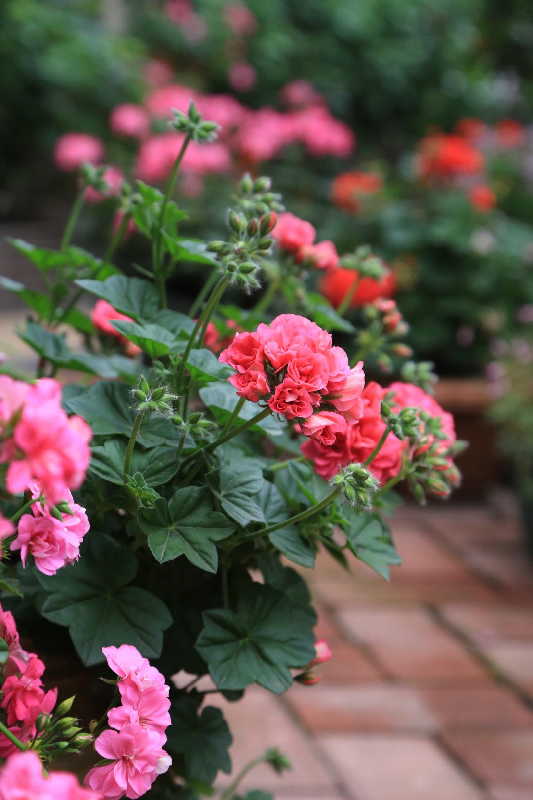 """Khu vườn quanh năm chỉ có """"mùa xuân"""" ở lại của cô giáo dạy Toán xinh đẹp - Ảnh 6."""