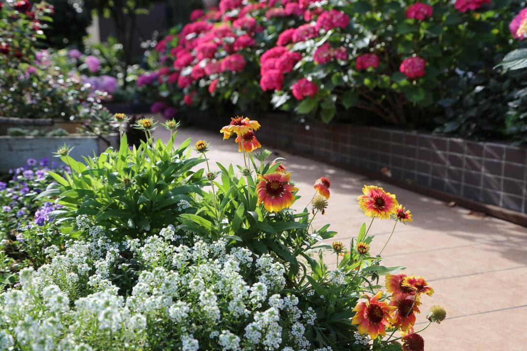 """Khu vườn quanh năm chỉ có """"mùa xuân"""" ở lại của cô giáo dạy Toán xinh đẹp - Ảnh 3."""