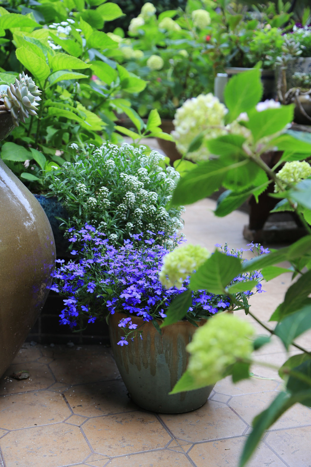 """Khu vườn quanh năm chỉ có """"mùa xuân"""" ở lại của cô giáo dạy Toán xinh đẹp - Ảnh 9."""