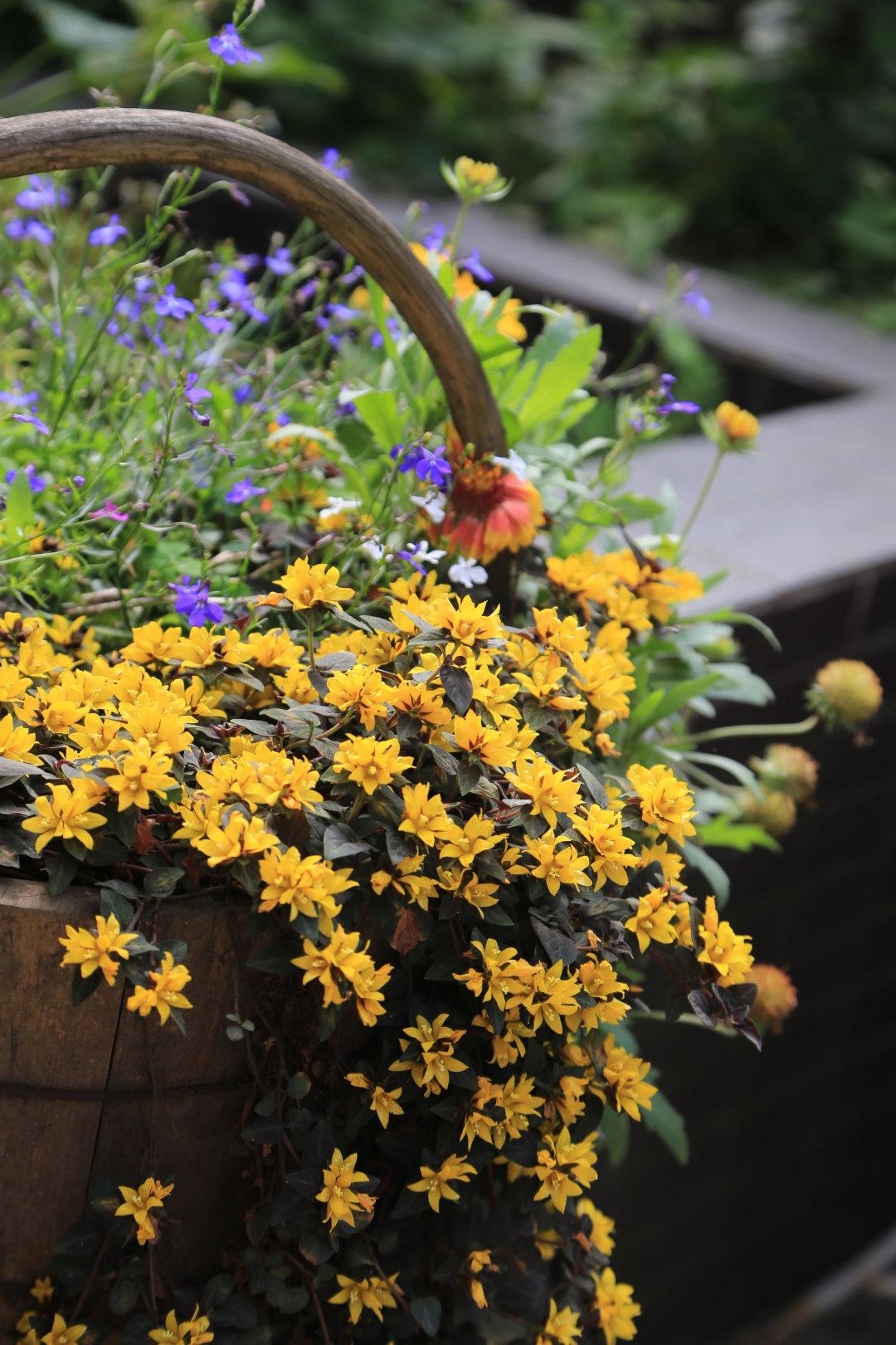 """Khu vườn quanh năm chỉ có """"mùa xuân"""" ở lại của cô giáo dạy Toán xinh đẹp - Ảnh 11."""