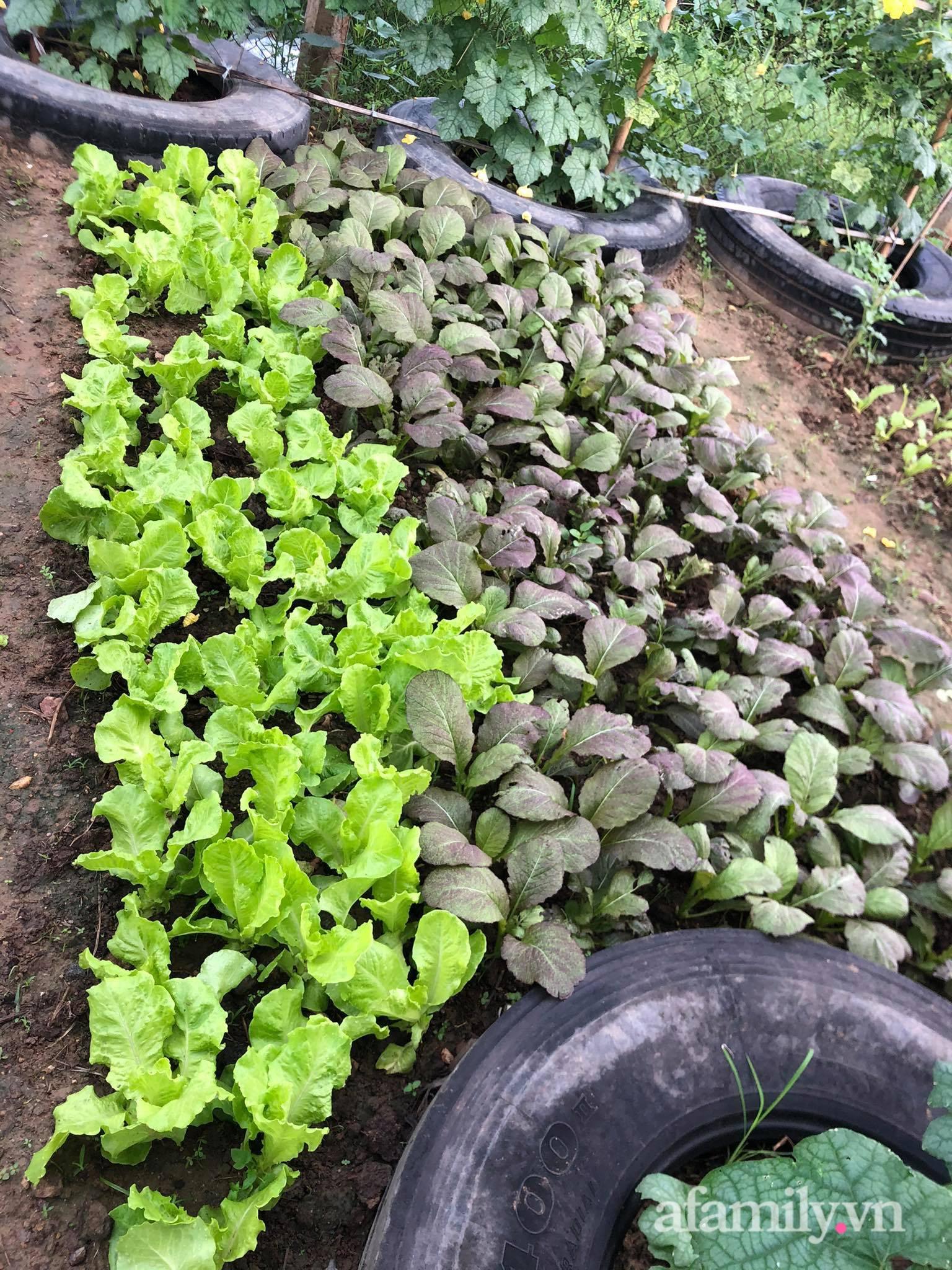 Vườn 500m² được quy hoạch khoa học để trồng đủ các loại rau quả sạch của mẹ đảm ở Quy Nhơn - Ảnh 2.
