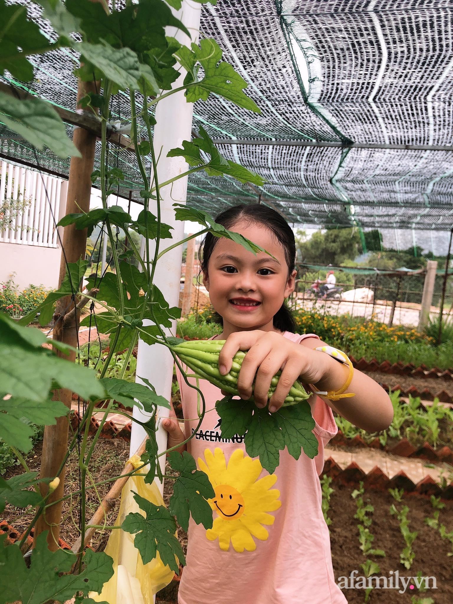 Vườn 500m² được quy hoạch khoa học để trồng đủ các loại rau quả sạch của mẹ đảm ở Quy Nhơn - Ảnh 4.