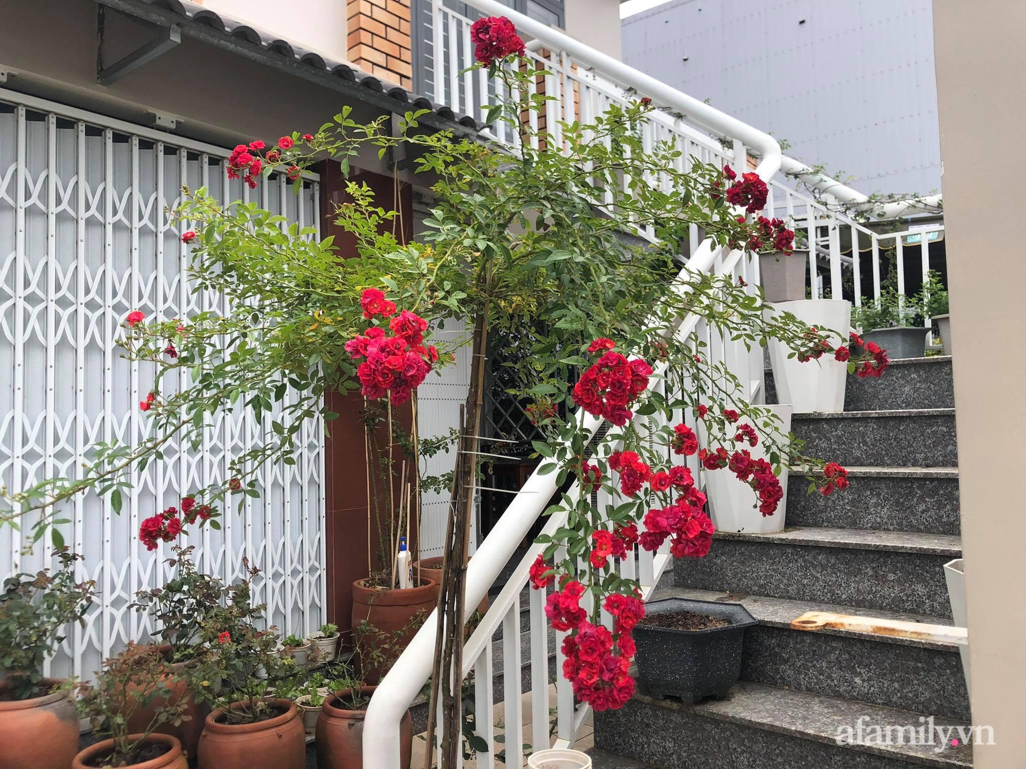 Vườn 500m² được quy hoạch khoa học để trồng đủ các loại rau quả sạch của mẹ đảm ở Quy Nhơn - Ảnh 11.