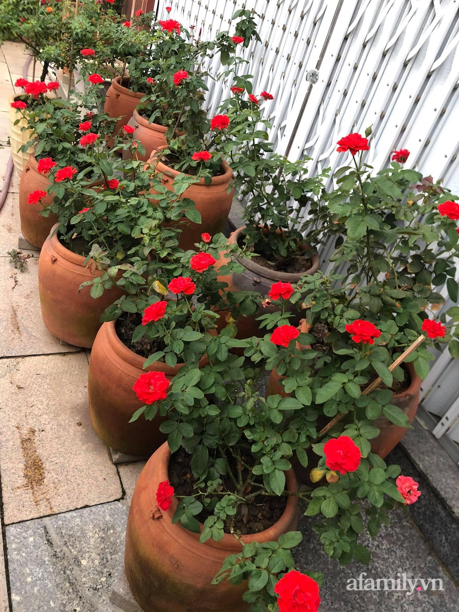 Vườn 500m² được quy hoạch khoa học để trồng đủ các loại rau quả sạch của mẹ đảm ở Quy Nhơn - Ảnh 14.