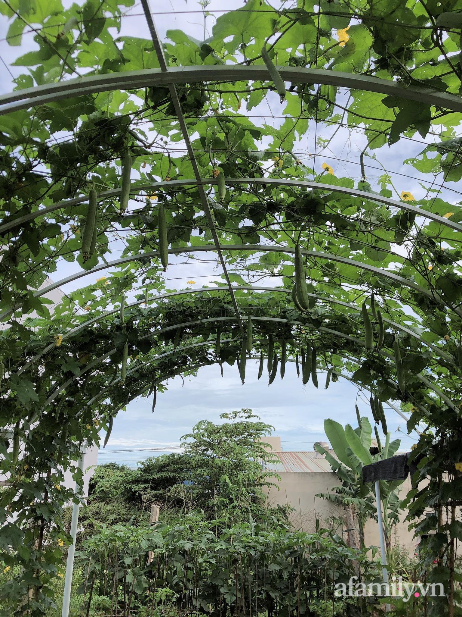 Vườn 500m² được quy hoạch khoa học để trồng đủ các loại rau quả sạch của mẹ đảm ở Quy Nhơn - Ảnh 7.