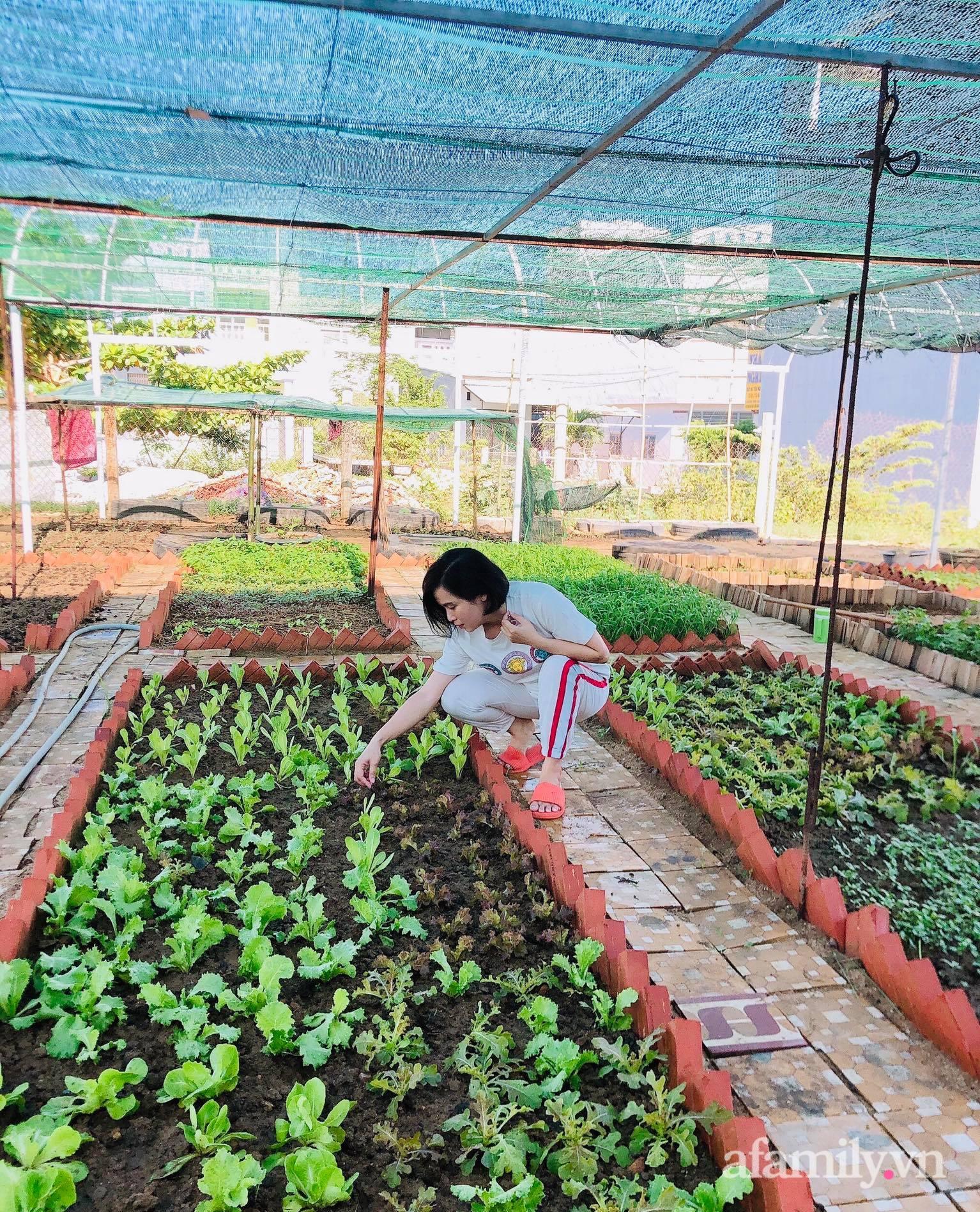 Vườn 500m² được quy hoạch khoa học để trồng đủ các loại rau quả sạch của mẹ đảm ở Quy Nhơn - Ảnh 1.