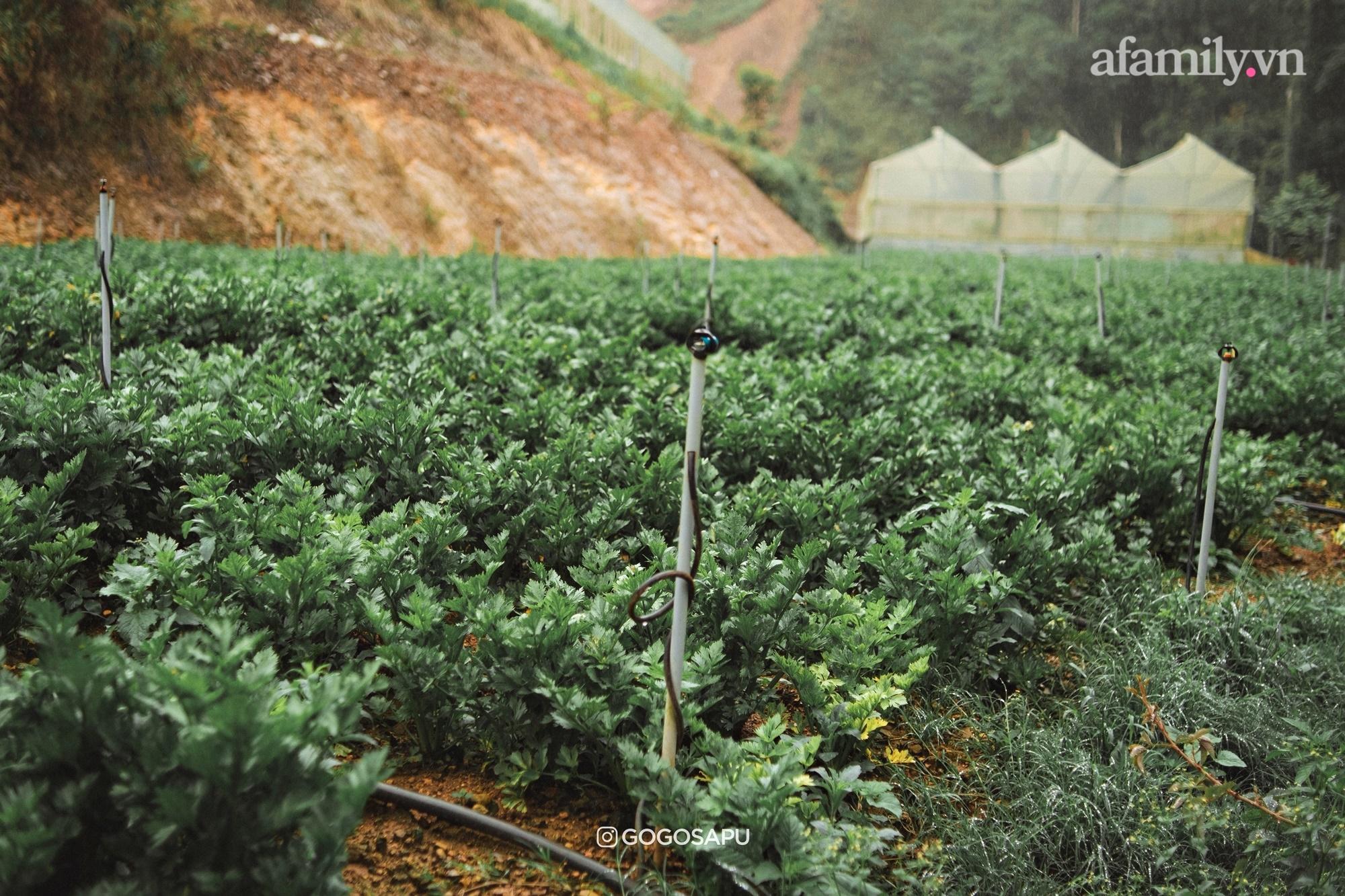 """Thung lũng """"bí ẩn"""" lạ lẫm ở Đà Lạt: Có hoa vàng cỏ xanh, suối mát lành đẹp như tranh vẽ, nhưng không phải cứ muốn đến là được, cũng chẳng có 3G để xài! - Ảnh 11."""