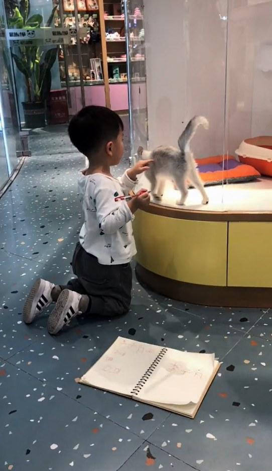 """Muốn vẽ mèo như thật, cậu bé nhốt """"mẫu"""" trong phòng rồi tỉ mẩn quan sát, đếm từng sợi lông, thành quả cuối cùng giơ ra ai cũng cười ná thở - Ảnh 4."""