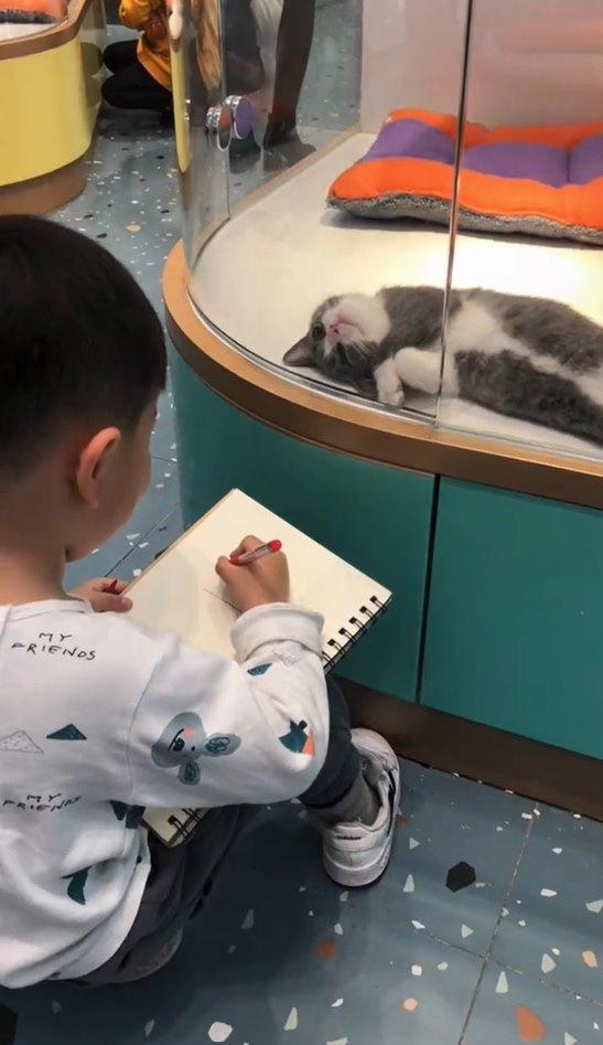"""Muốn vẽ mèo như thật, cậu bé nhốt """"mẫu"""" trong phòng rồi tỉ mẩn quan sát, đếm từng sợi lông, thành quả cuối cùng giơ ra ai cũng cười ná thở - Ảnh 5."""