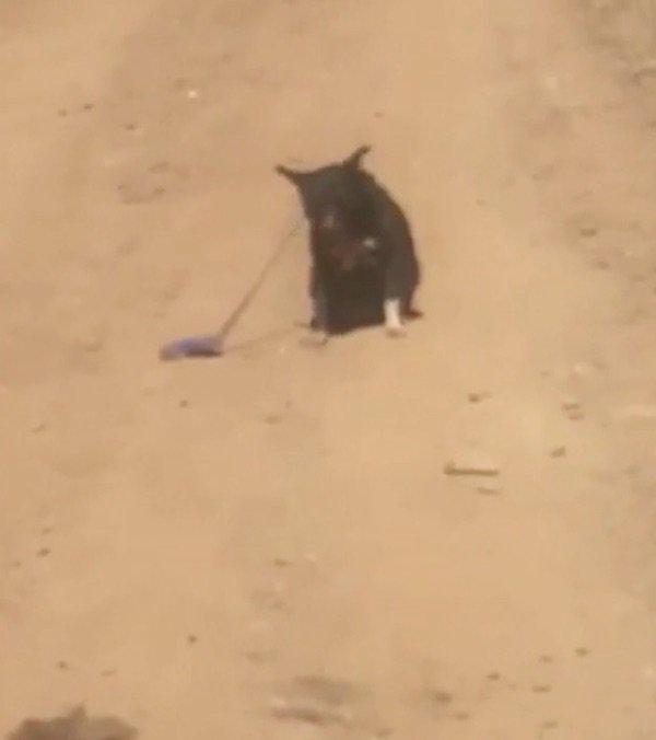 Lái xe trên đường gặp chú chó lạc chủ, tài xế đến giúp thì con vật từ chối, định rời đi trước khi hốt hoảng thấy cảnh tượng gần đó - Ảnh 2.
