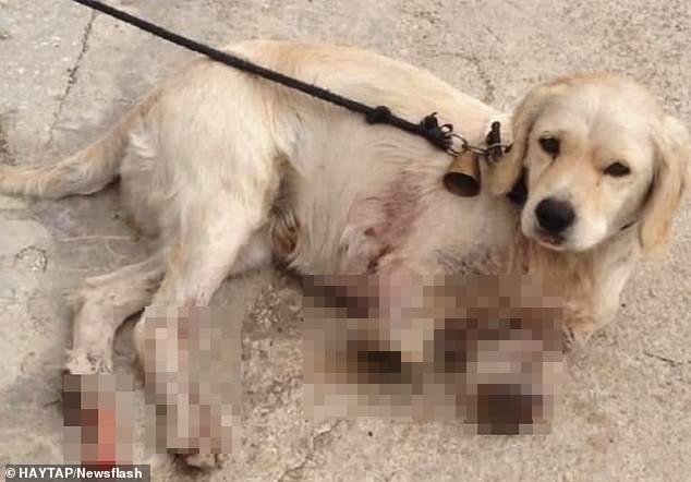 Sang nhà bên đuổi gà, chú chó bị hàng xóm bẻ gãy 2 chân nhưng hành động của chủ nhân con vật mới gây phẫn nộ tột cùng, cảnh sát phải vào cuộc điều tra - Ảnh 3.
