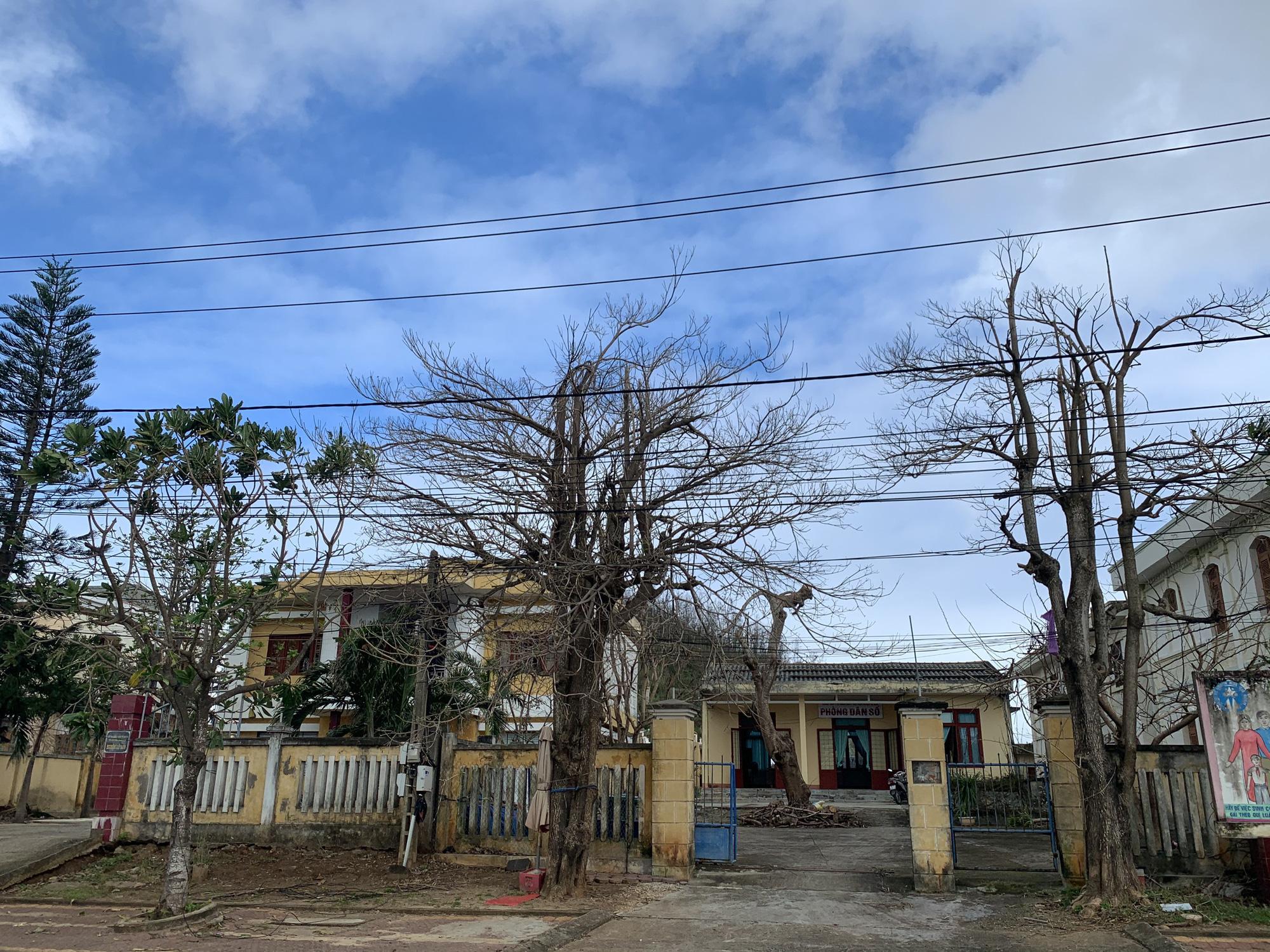 Hàng chục ngàn cây xanh trên đảo Lý Sơn bị bão vặt trụi lá  - Ảnh 12.