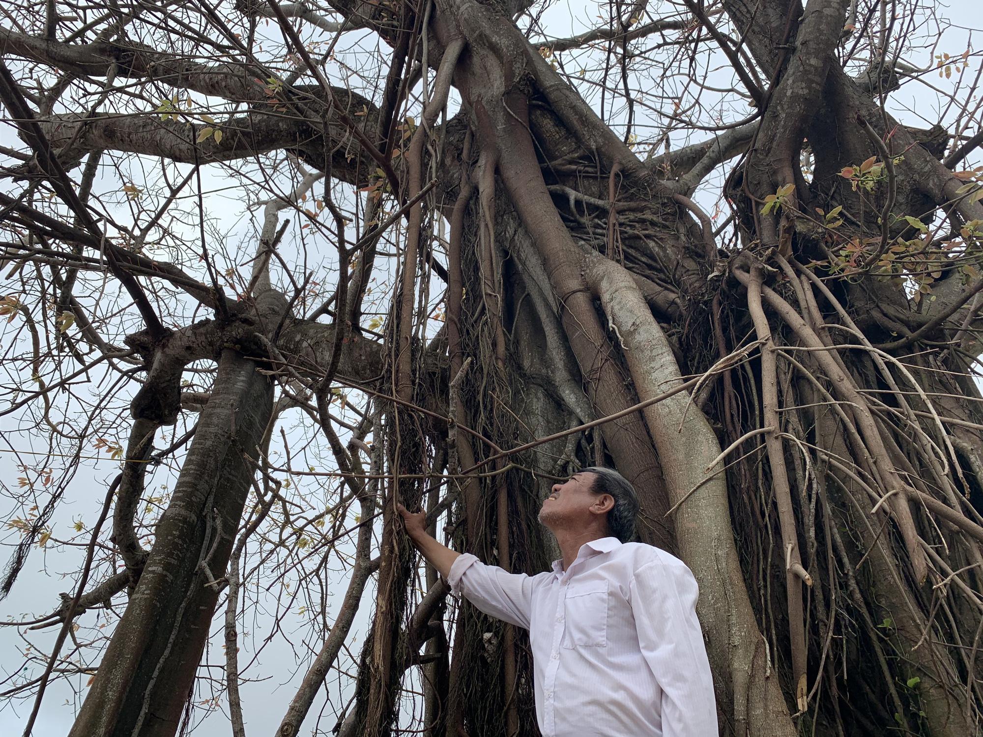 Hàng chục ngàn cây xanh trên đảo Lý Sơn bị bão vặt trụi lá  - Ảnh 1.