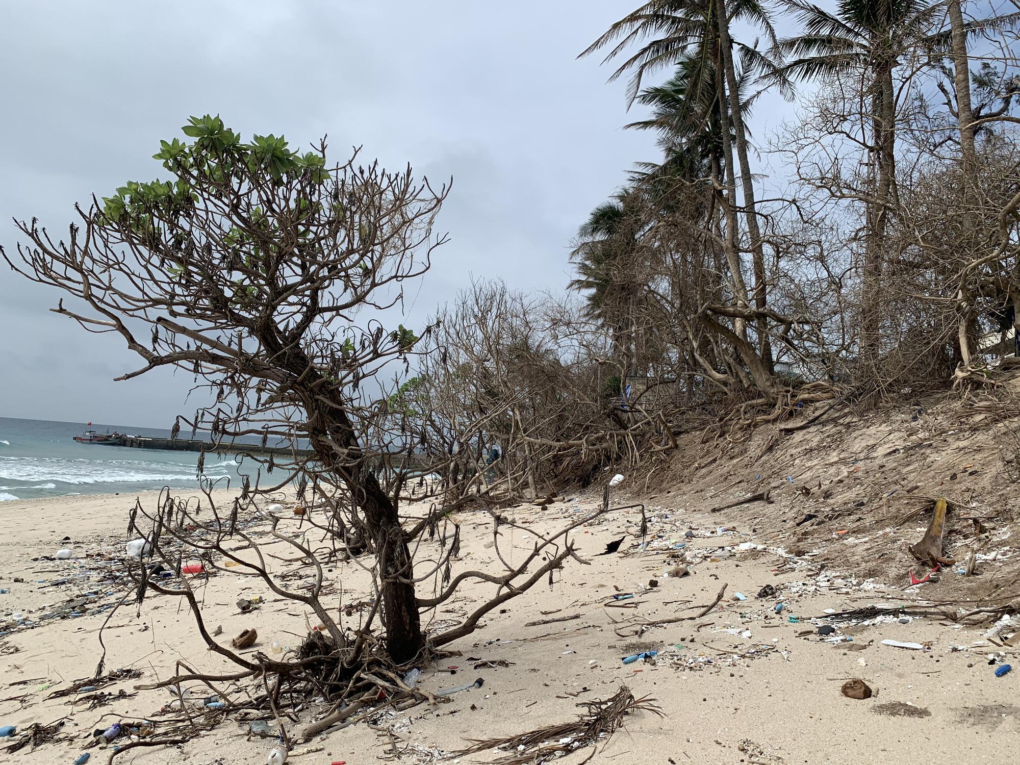 Hàng chục ngàn cây xanh trên đảo Lý Sơn bị bão vặt trụi lá  - Ảnh 7.