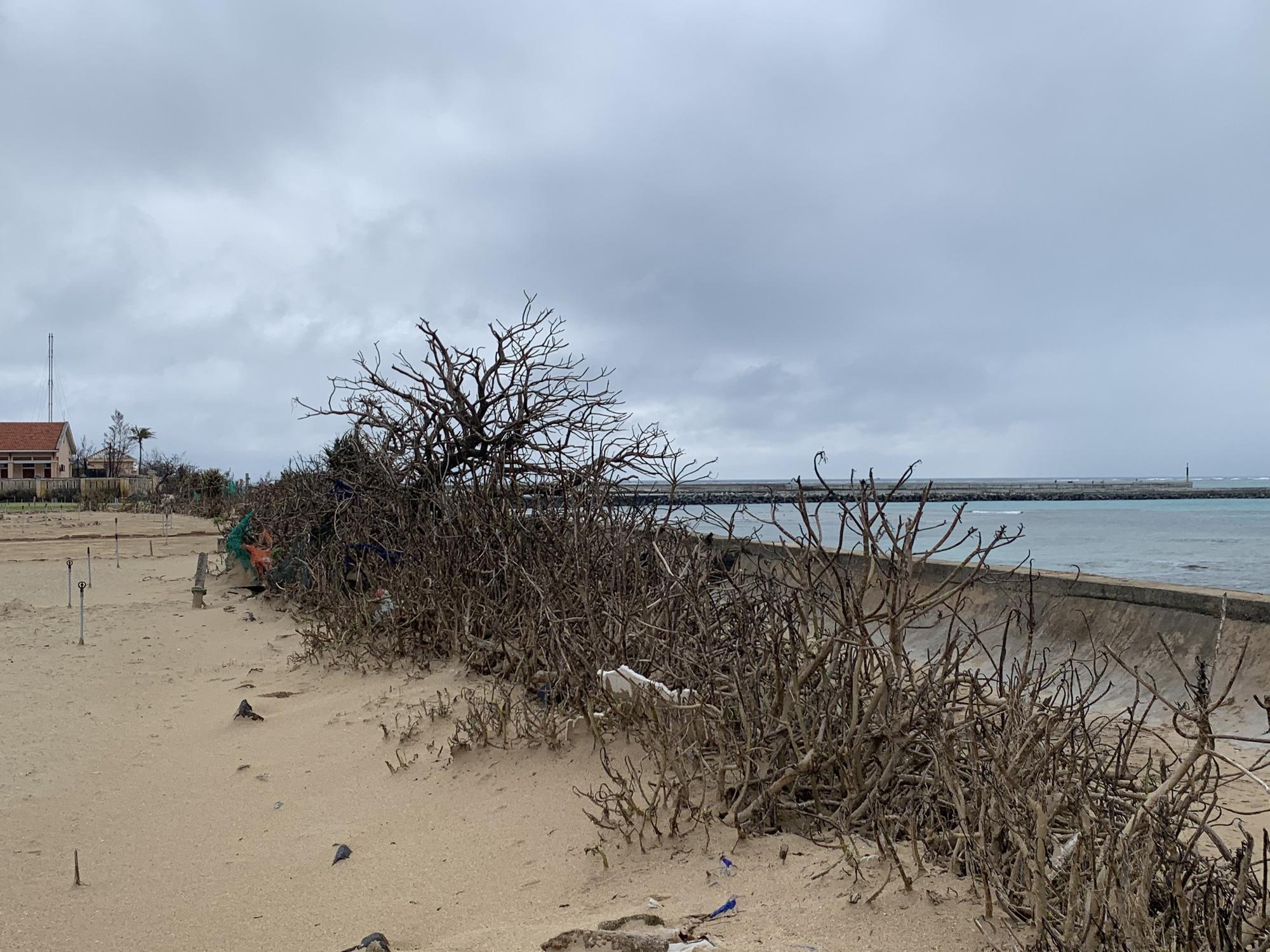 Hàng chục ngàn cây xanh trên đảo Lý Sơn bị bão vặt trụi lá  - Ảnh 5.