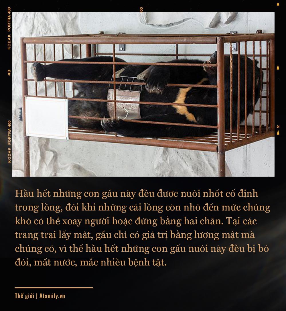 """Những màn tra tấn tàn ác từ ngành công nghiệp nuôi gấu lấy mật để có """"thần dược"""" và sự thật lạnh người khiến con người có thể phải trả giá đắt - Ảnh 5."""