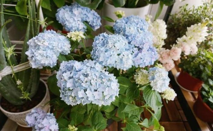 Vì yêu hoa, cô gái xinh như mộng mua ngay căn hộ áp mái để trồng cả vườn hồng trên sân thượng rộng 33m² - Ảnh 15.