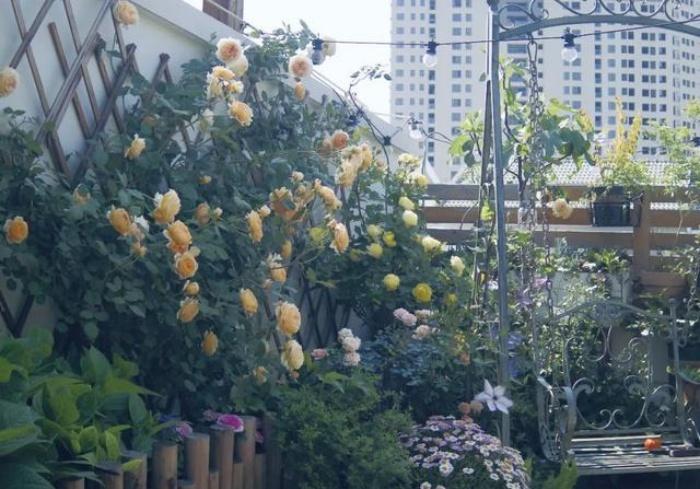 Vì yêu hoa, cô gái xinh như mộng mua ngay căn hộ áp mái để trồng cả vườn hồng trên sân thượng rộng 33m² - Ảnh 2.