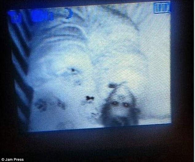 Được nhờ đến trông cháu, cô gái trẻ hoảng sợ nhìn thấy cảnh tượng trong cũi khi đứa trẻ ngủ chúc đầu xuống giường, phải cầu cứu dân mạng - Ảnh 8.