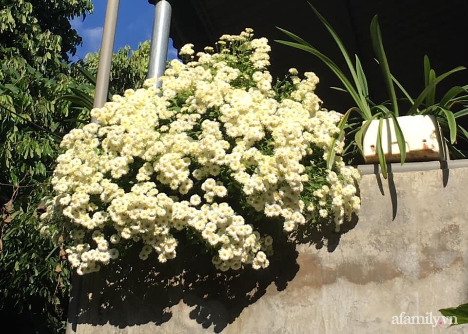 Ngôi nhà ngập tràn sắc màu hoa cúc đẹp lãng mạn của cô giáo phố núi Sơn La - Ảnh 5.