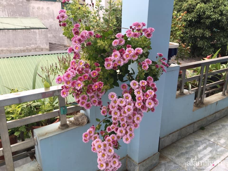 Ngôi nhà ngập tràn sắc màu hoa cúc đẹp lãng mạn của cô giáo phố núi Sơn La - Ảnh 7.