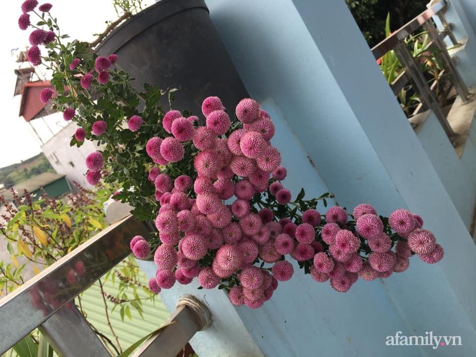 Ngôi nhà ngập tràn sắc màu hoa cúc đẹp lãng mạn của cô giáo phố núi Sơn La - Ảnh 6.