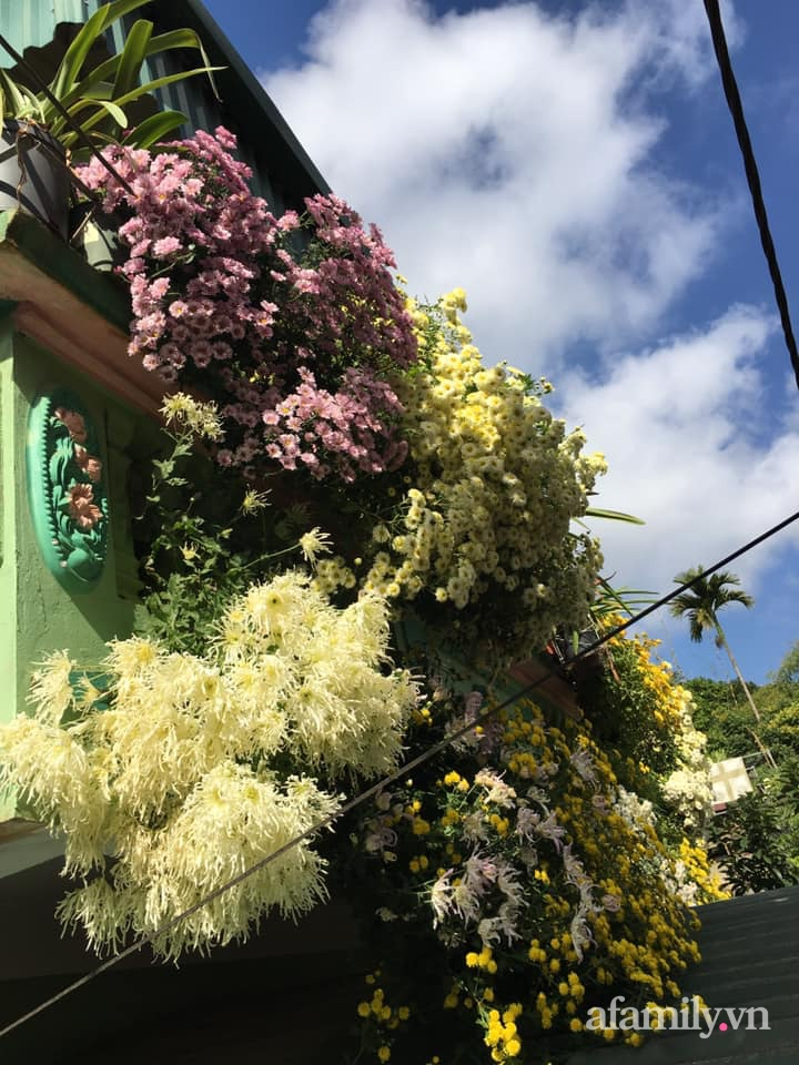 Ngôi nhà ngập tràn sắc màu hoa cúc đẹp lãng mạn của cô giáo phố núi Sơn La - Ảnh 15.