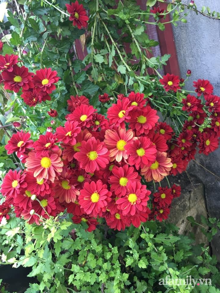 Ngôi nhà ngập tràn sắc màu hoa cúc đẹp lãng mạn của cô giáo phố núi Sơn La - Ảnh 8.