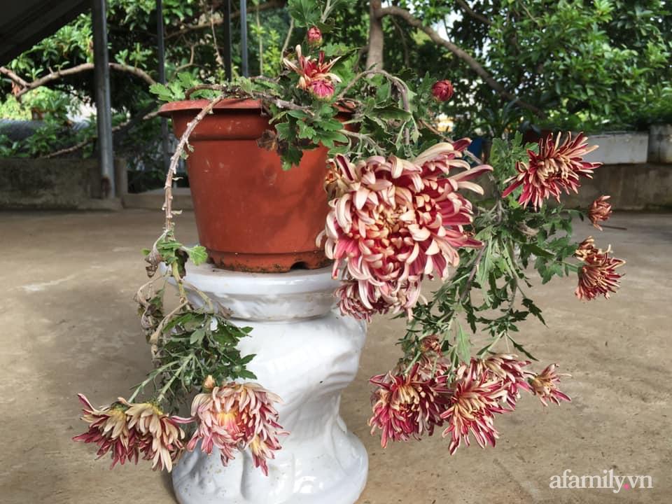 Ngôi nhà ngập tràn sắc màu hoa cúc đẹp lãng mạn của cô giáo phố núi Sơn La - Ảnh 13.