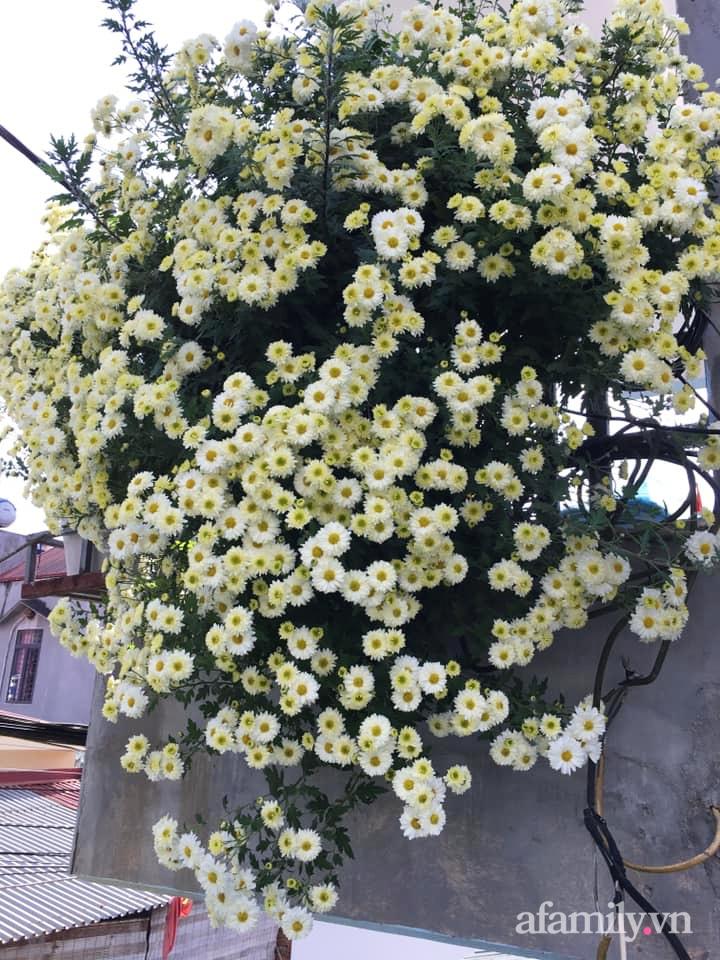 Ngôi nhà ngập tràn sắc màu hoa cúc đẹp lãng mạn của cô giáo phố núi Sơn La - Ảnh 16.
