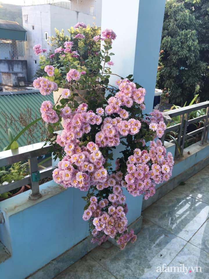 Ngôi nhà ngập tràn sắc màu hoa cúc đẹp lãng mạn của cô giáo phố núi Sơn La - Ảnh 14.