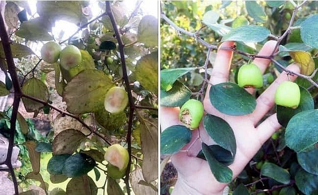Nhóm sinh viên vào vườn táo chơi nhưng ra về để lại cây táo bị gặm nham nhở và lời nhắn thô tục khiến dân tình bức xúc - Ảnh 3.